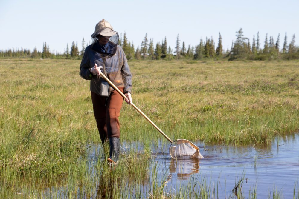 A teacher collects samples in Manitoba. (Courtesy Allison Maria Rodriguez)