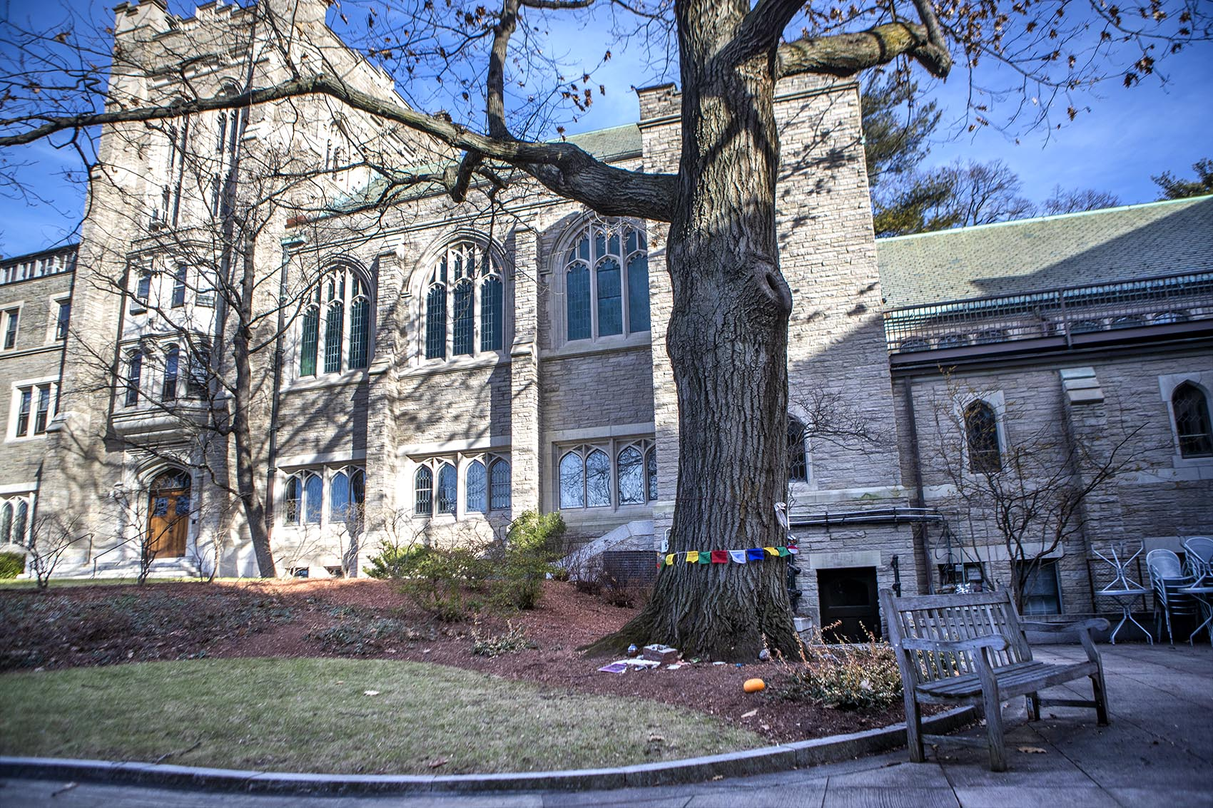 The large red oak tree is at the center of a debate at the Harvard Divinity School. The tree is slated for removal to make room to renovate and expand Andover Hall. (Jesse Costa/WBUR)
