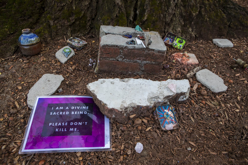 Items left at the base of the tree show opposition to its removal. (Jesse Costa/WBUR)