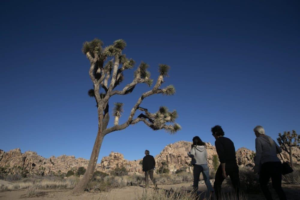 People visit Joshua Tree National Park in Southern California's Mojave Desert, Thursday, Jan. 10, 2019. (Jae C. Hong/AP)