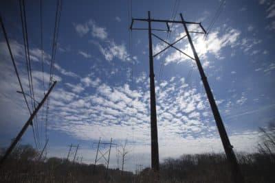 Powerlines (Jesse Costa/WBUR)