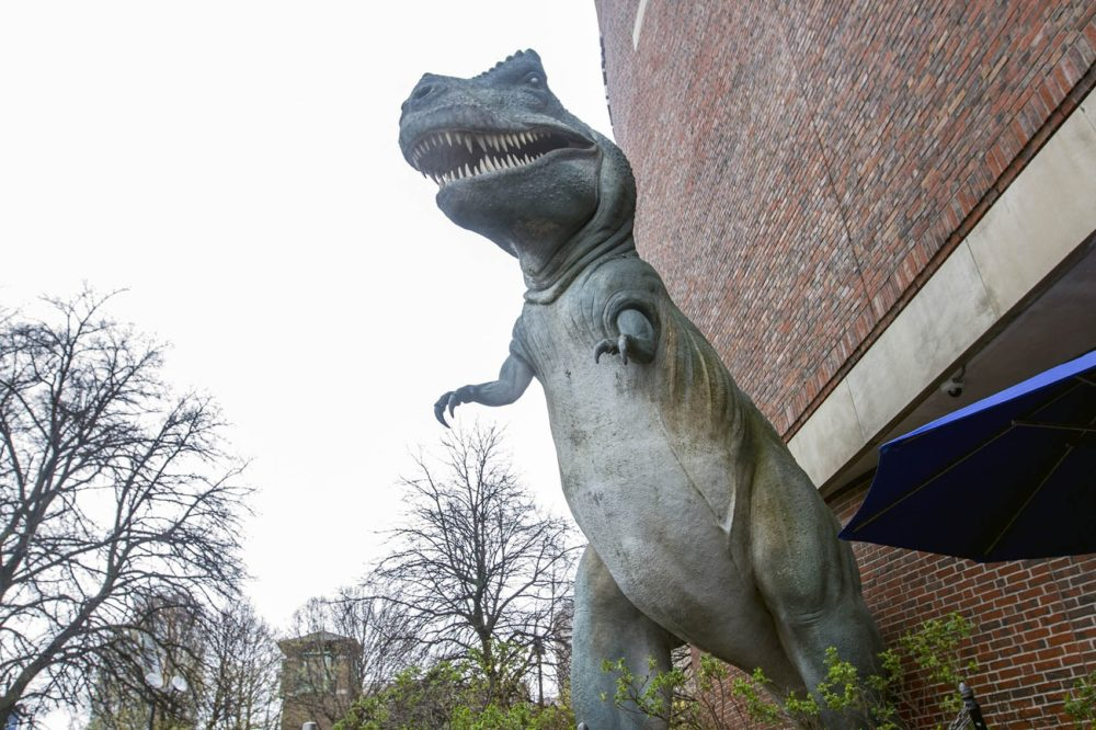 A T-Rex outside Museum of Science, Boston. (Joe Difazio foe WBUR)