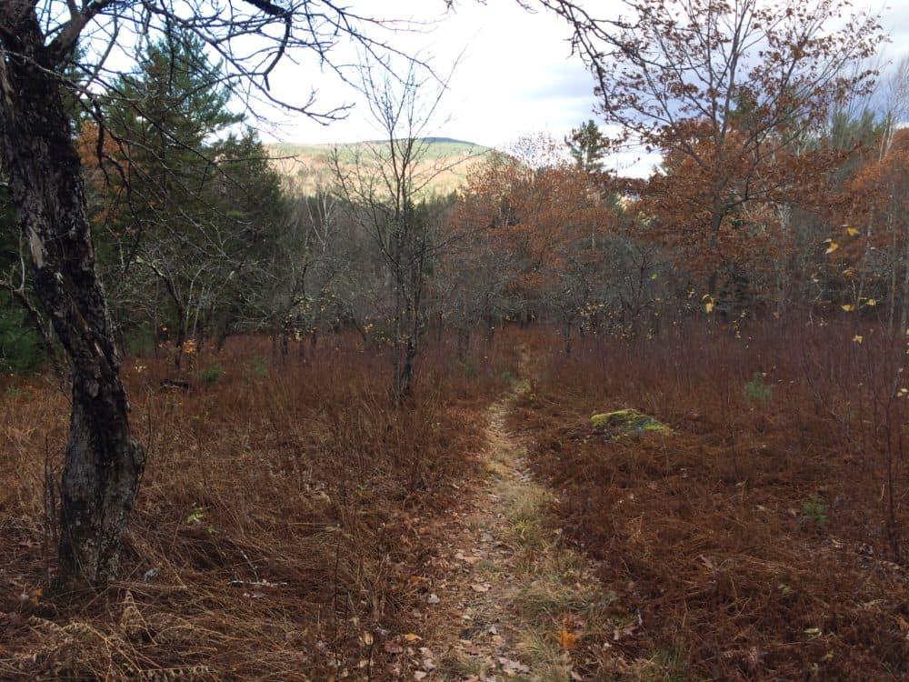 A mountain bike trail in Thornton, N.H. (Courtesy Sam Evans-Brown)