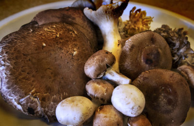 A bounty of mushrooms. (Jesse Costa/WBUR)