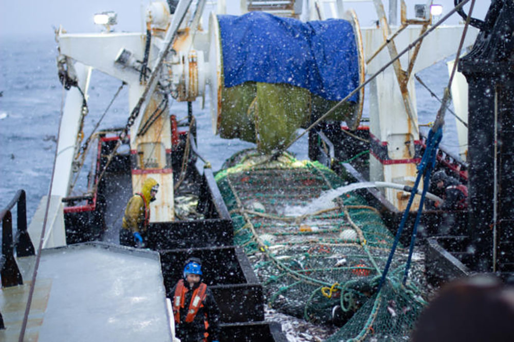 Crew members on the fishing vessel Commodore empty a trawl net of pollock on the Bering Sea in January. (Nathaniel Herz/Alaska's Energy Desk)