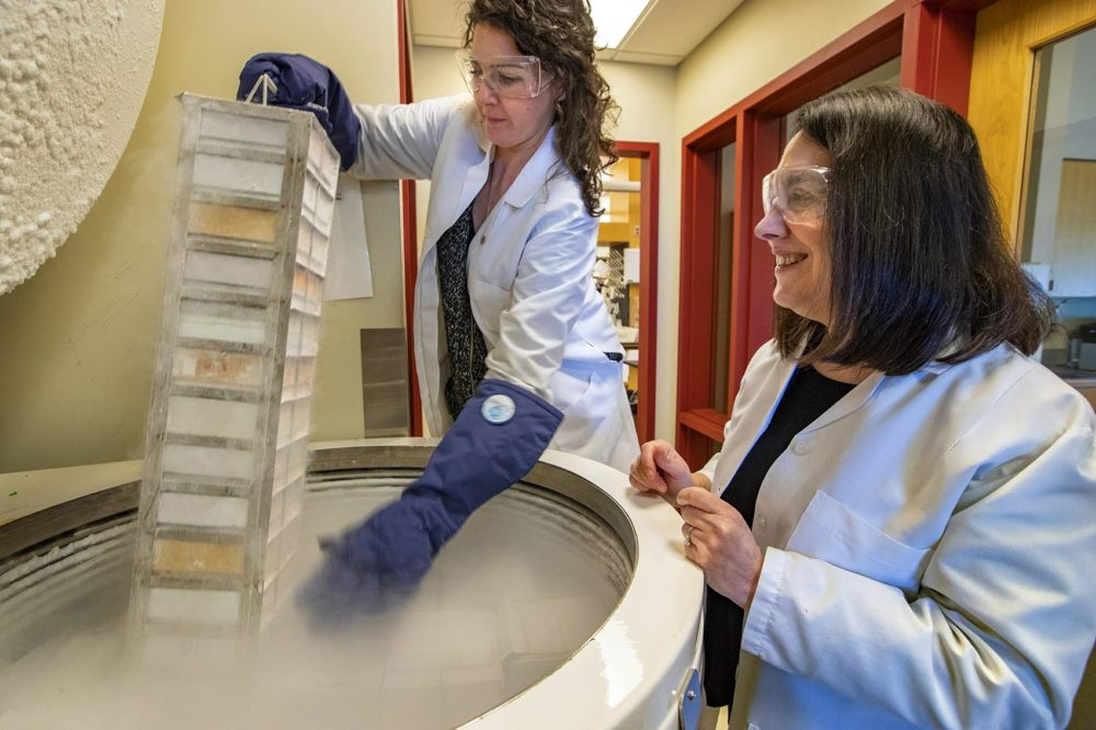 Arlene Sharpe, right, watches as Graduate Student Emily Gaudiano removes a rack of samples of cancer cell lines from mice from a freezer at the Sharpe Laboratory at Harvard Medical School. (Jesse Costa/WBUR)