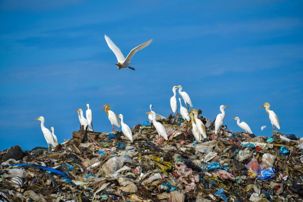 Egret birds fly over the top of a rubbish pile in a garbage center in Blang Bintang, Indonesia. (Chaideer Mahyuddin/AFP/Getty Images)