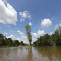 In this Friday, April 27, 2018, file photo, trees in a cutback sit between an existing pipeline channel, left, and a new pipeline channel, on Bayou Sorrel in the Atchafalaya River Basin in Louisiana. Owners of a newly completed south Louisiana pipeline say they expect the transport of crude oil from Lake Charles to St. James to begin Monday, April 1, 2019. (Gerald Herbert/AP)