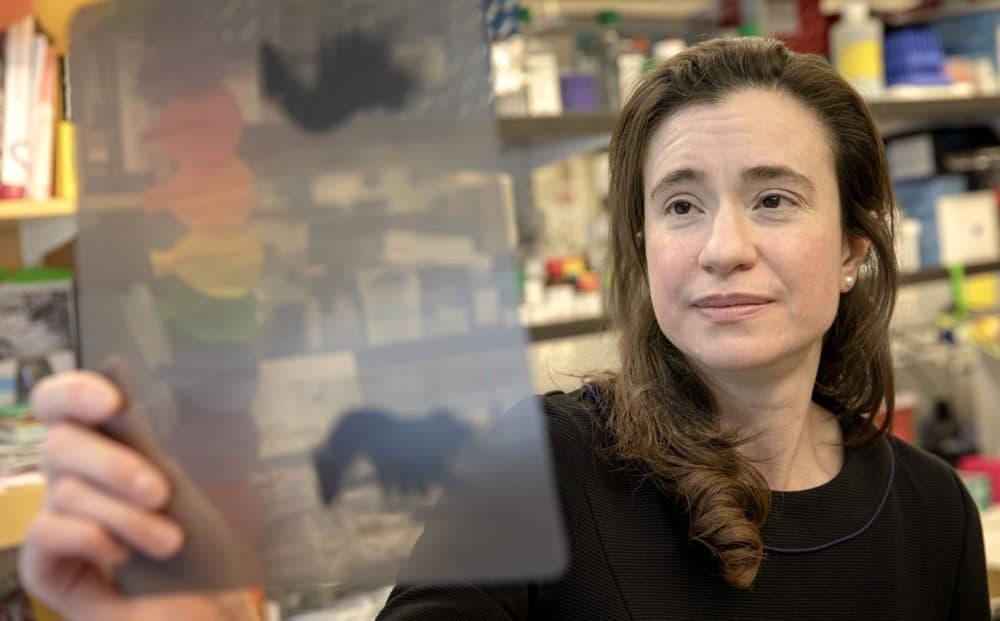 Associate professor of neuroscience Myriam Heiman examines a data sheet at her MIT lab. (Robin Lubbock/WBUR)