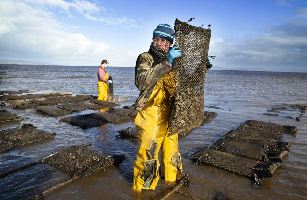 Farmers tend the oysters at William Lynch's Foylemore Oysters farm in Lough Foyle in County Donegal, Ireland, on March 7, 2019. For 20 years, William Lynch has farmed oysters in disputed waters along the Irish border. With Brexit looming, a convenient grey area which has allowed him to flourish could be coming to an end. (Paul Faith/Getty Images)