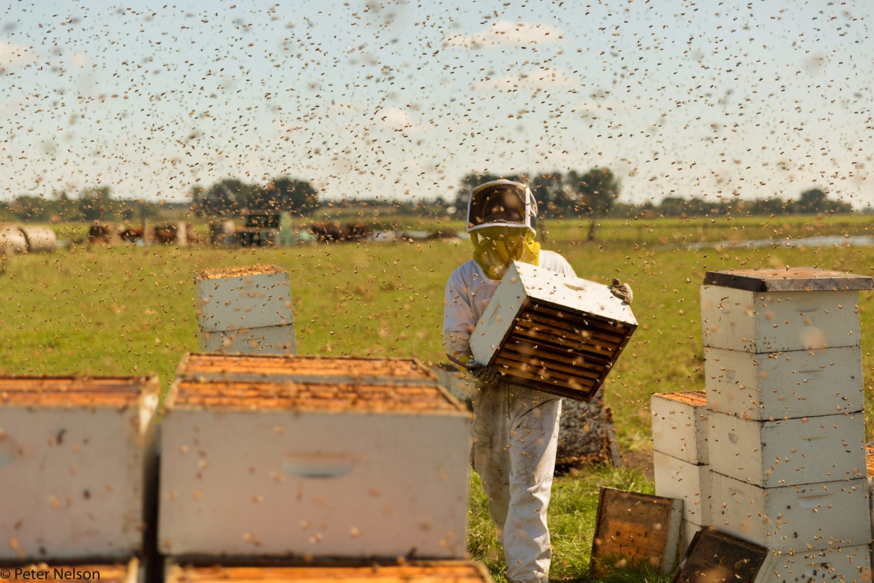 Bees Are In Trouble  Here's How You Can Help | Earthwhile