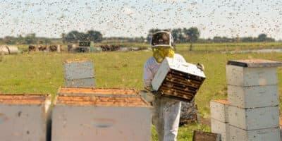 "A scene from ""The Pollinators."" (Courtesy IFFB)"