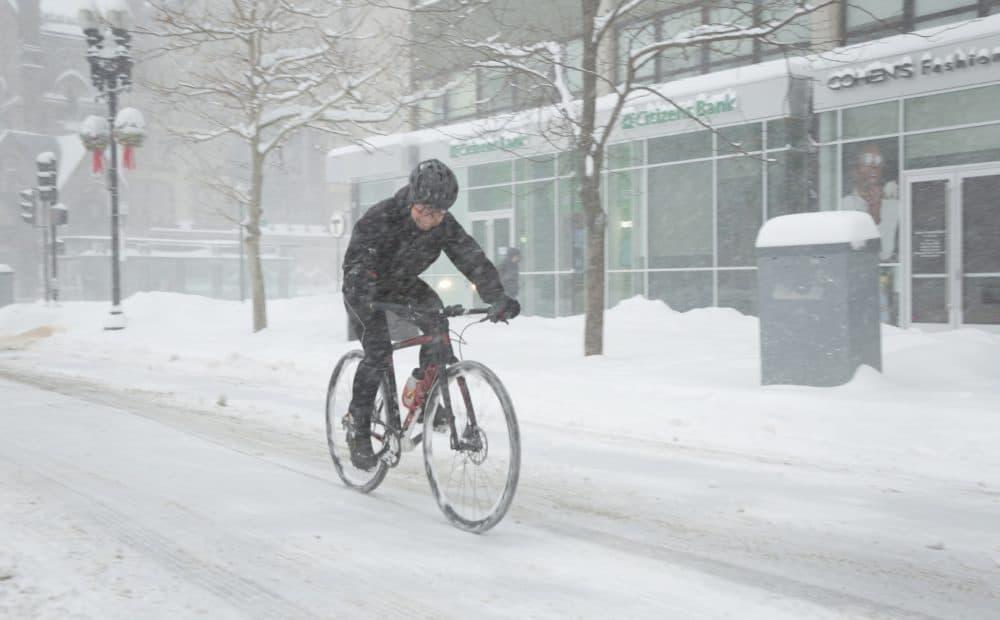 Snow? What snow? (Robin Lubbock/WBUR)