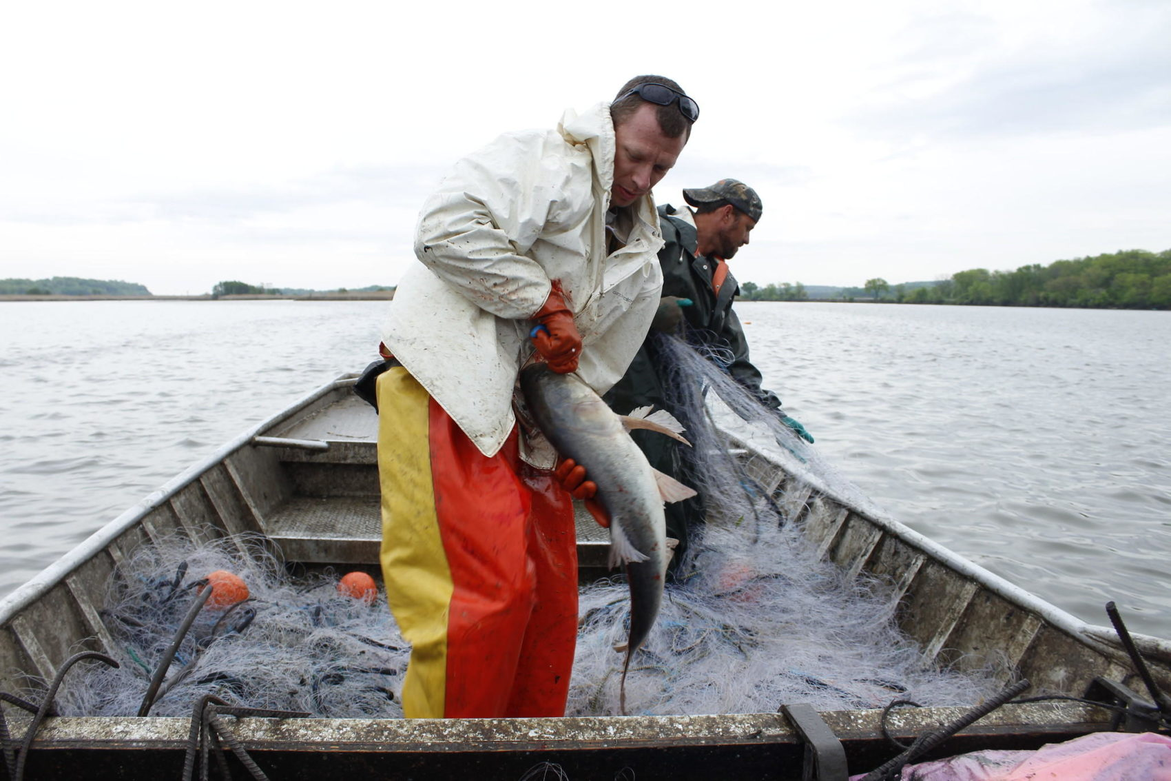 From Carp To Pig-Hide: Bait Shortage Means Change For