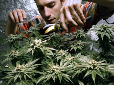 After the movement to legalize marijuana scored several victories in New England, pot proponents have come up against some stumbling blocks in New Hampshire and Vermont. (Robert F. Bukaty/AP)