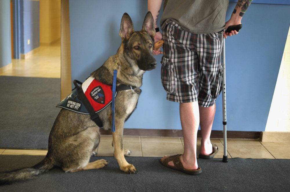 Army veteran Brad Schwarz brings his service dog Panzer for a check up at Southwest Animal Care Center in Palos Hills, Illinois. (Scott Olson/Getty Images)