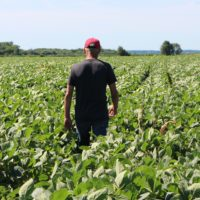 A soy farmer walks through his fields July 6, 2018, in Harvard, Illinois, the same day China imposed retaliatory tariffs aimed at the U.S. soybean market. (NOVA SAFO/AFP/Getty Images)