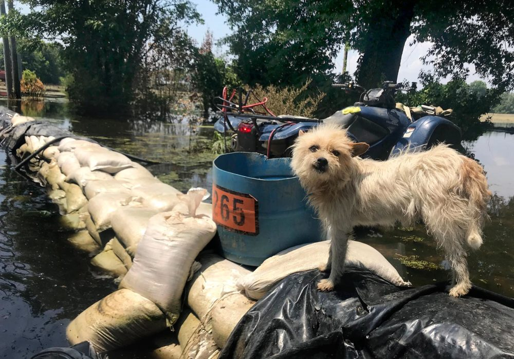 Anderson Jones' dogs had been living on top of the wall of sandbags that surrounded his house. (Peter O'Dowd/Here & Now)