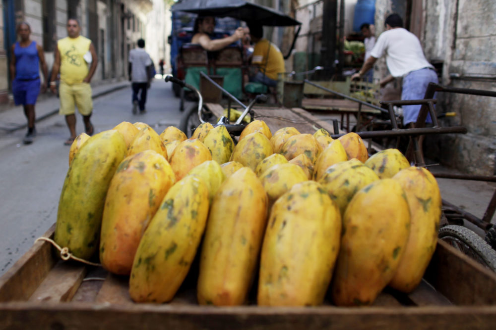 Mexican papayas linked to salmonella outbreak