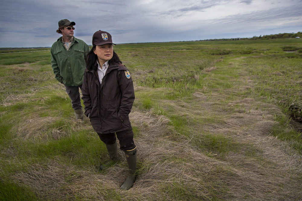 Geoff Wilson and Nancy Pau look over some of the previous work they have accomplished in the Parker River Wildlife Refuge. (Jesse Costa/WBUR)