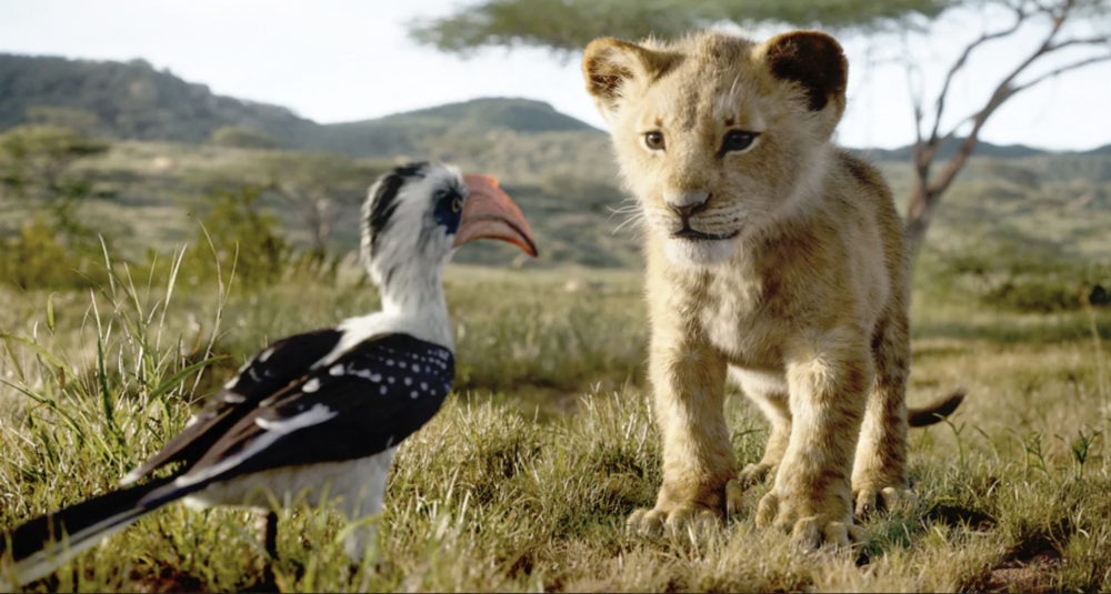 """John Oliver voices Zazu and JD McCrary voices Young Simba in the live-action remake of """"The Lion King."""" (Courtesy Disney Enterprises, Inc.)"""