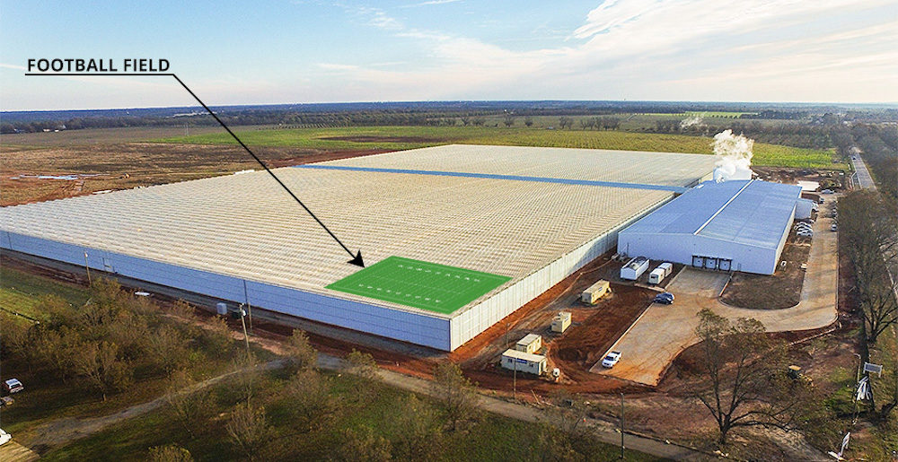 The Pure Flavor greenhouse in Fort Valley, Ga., currently spans 25 acres – or roughly the size of 19 football fields. The facility will triple in size to 75 acres by 2022. (Pure Flavor)