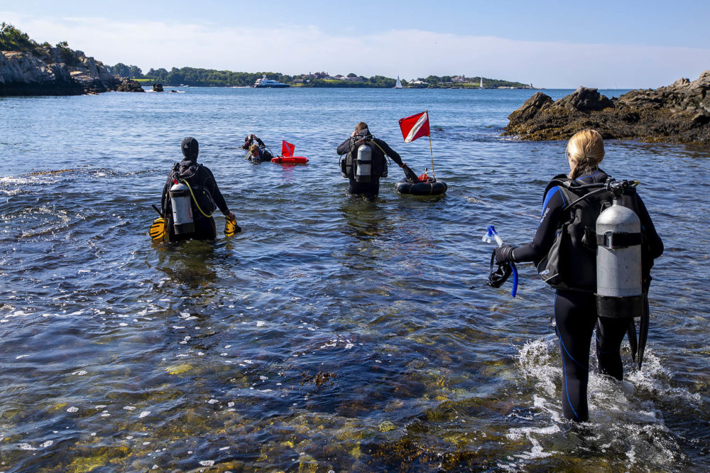 Koty Sharp and her team walk out into Narragansett Bay in search of Northern Star coral along the coastline at Fort Wetherill State Park. (Jesse Costa/WBUR)