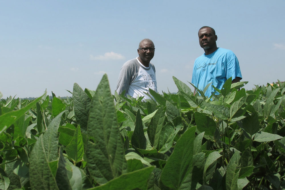 In this Wednesday, June 25, 2018 photo, David Allen Hall, left, and Tyrone Grayer pose for a photo in their soybean field, in Parchman, Miss. (Adrian Sainz/AP)