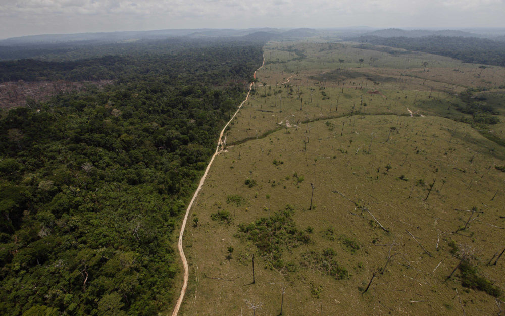 A deforested area near Novo Progresso in Brazil's northern state of Para. (Andre Penner/AP)