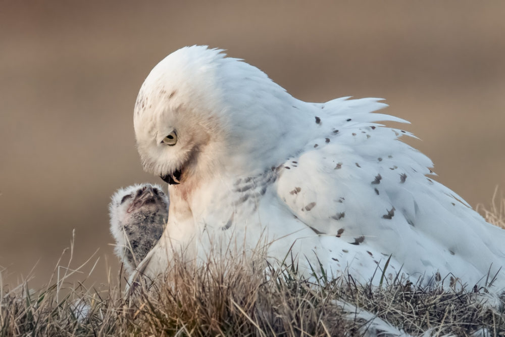 Is It Ever Morally Wrong To Take Pictures Of Animals? One Wildlife Photographer Says Yes | Here & Now