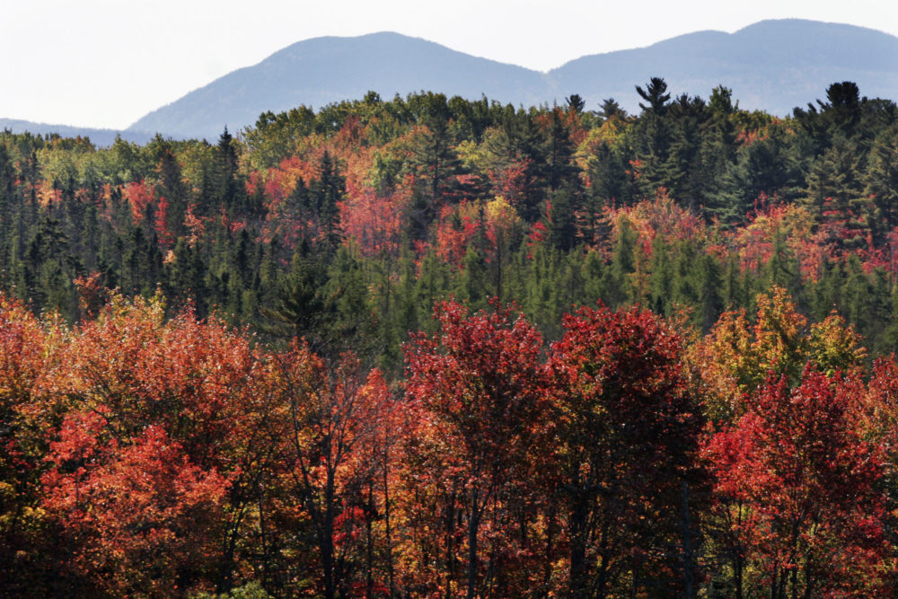 Fall foliage as the mountain tops of Acadia National Park are seen in the background on Oct. 9, 2007.  (AP Photo/Pat Wellenbach)