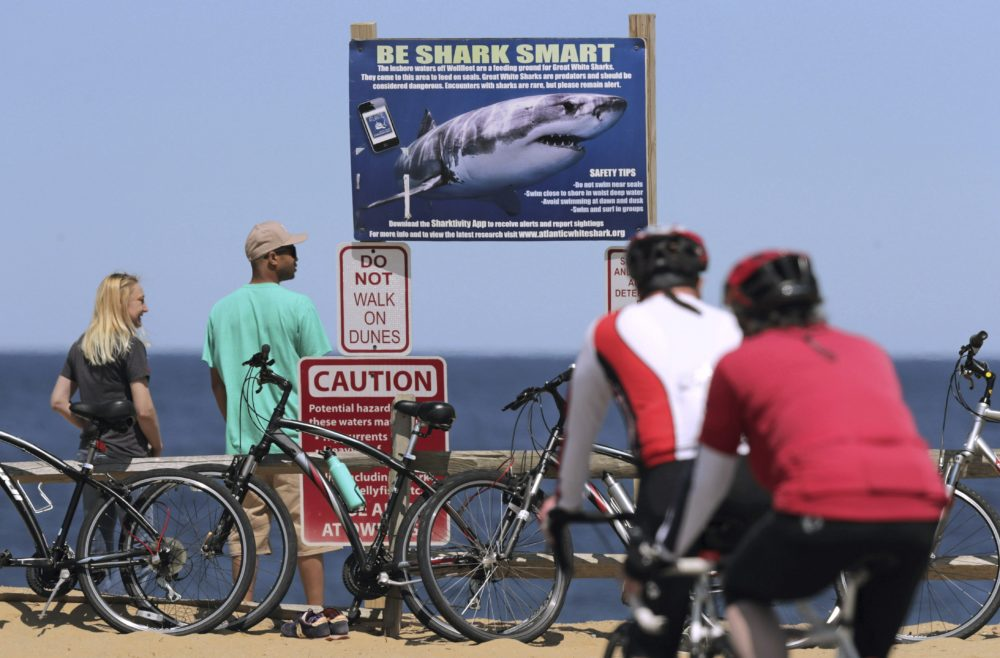 A couple stands next to a shark warning sign while looking at the ocean at Lecount Hollow Beach in Wellfleet, Mass. Local chamber of commerce data suggests Cape Cod lodging and beach visit numbers are down. (Charles Krupa/AP File Photo)