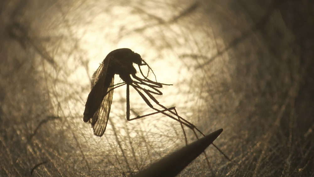 State and federal health officials are reporting a higher than usual number of deaths and illnesses from the mosquito-borne virus Eastern Equine Encephalitis. (Rick Bowmer/AP)