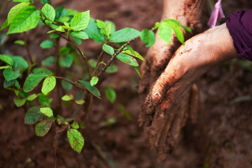 A new report by the U.N. Intergovernmental Panel on Climate Change finds that the Earth's soil is degrading at an alarming rate. (Michael Tewelde/AFP/Getty Images)