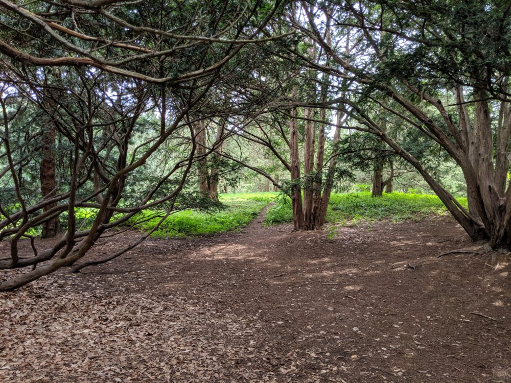 Forest bathing in the Arnold Arboretum