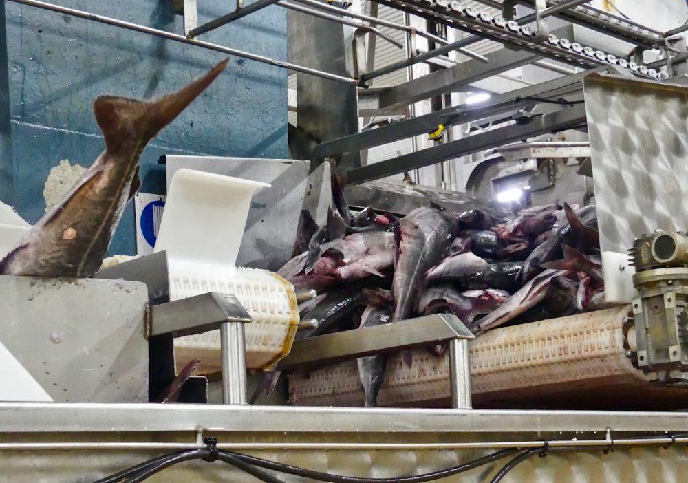 Brim Fisheries. (Karyn Miller-Medzon)