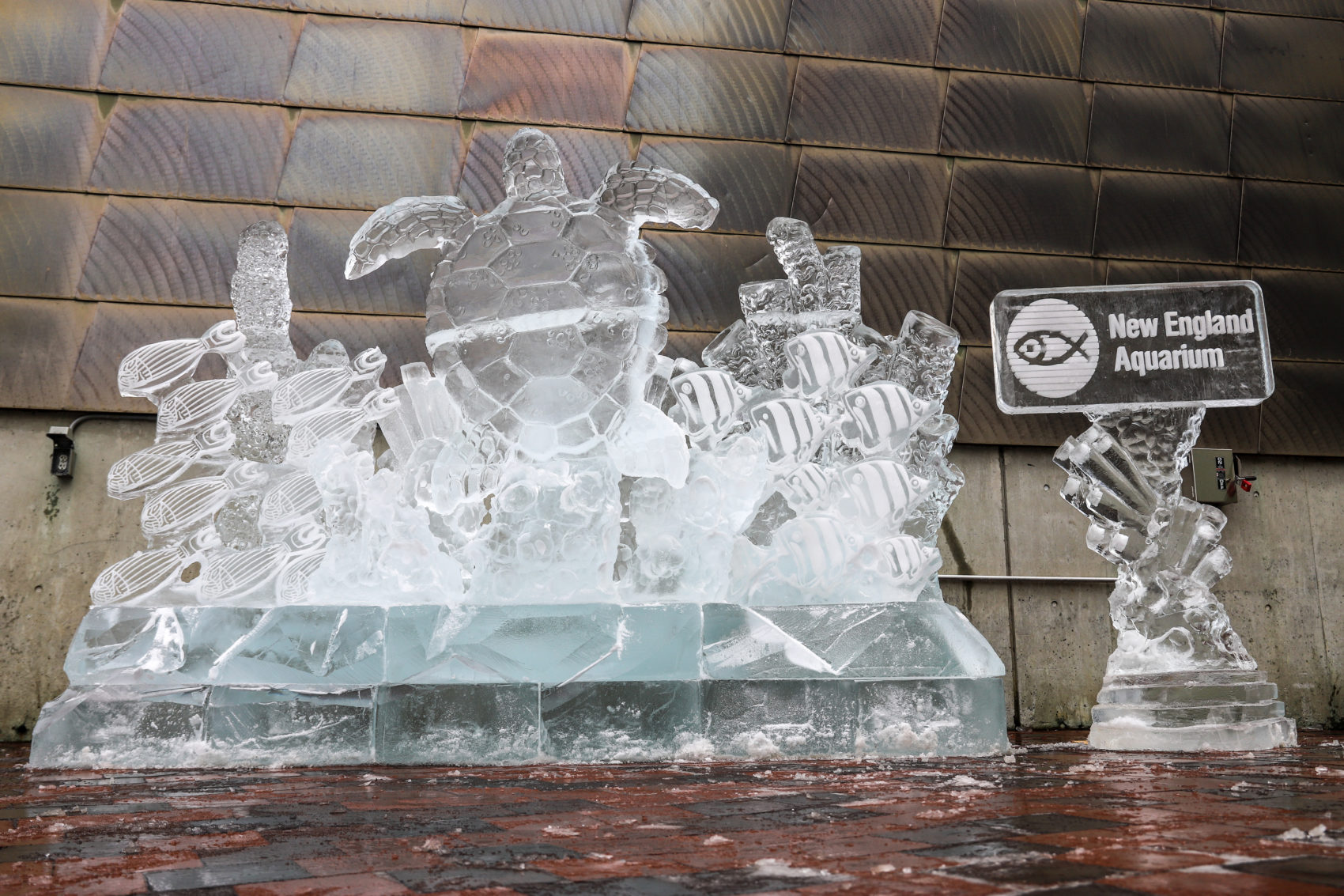 Artist Don Chapelle and his Brilliant Ice Sculpture crew are carving 12,000 pounds of ice into the shape a  loggerhead sea turtle (Courtesy)