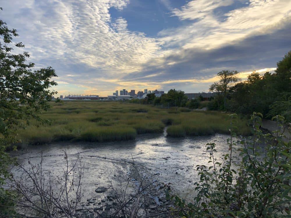 Belle Isle Marsh (Photo courtesy Friends of Belle Isle Marsh)