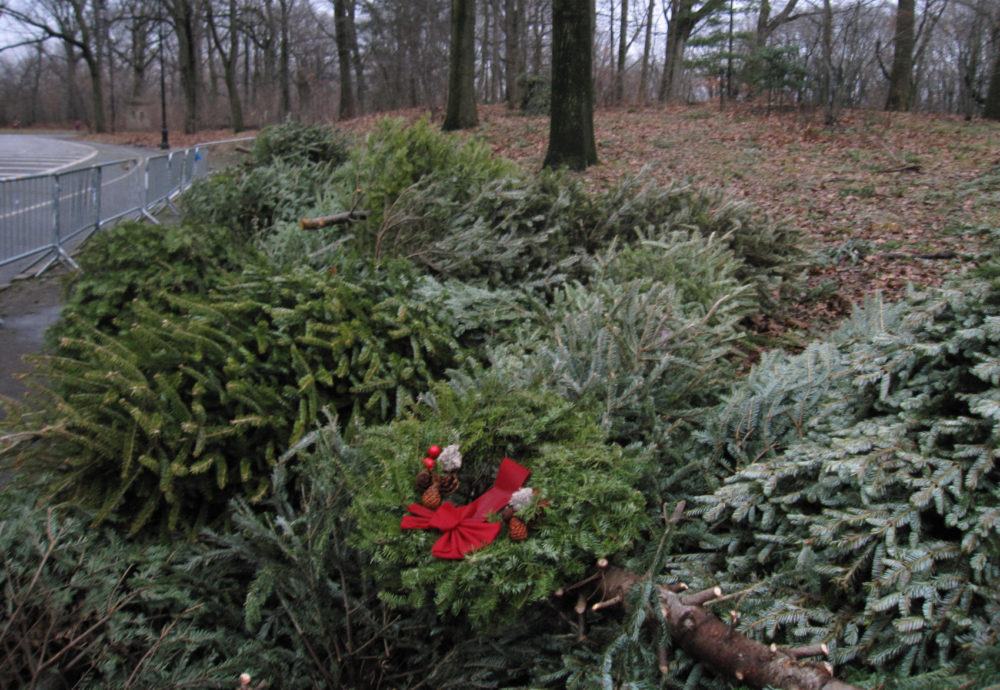 Does a popular and long-running program to use dead Christmas trees to help prevent coastal erosion actually work? (Beth J. Harpaz/AP)