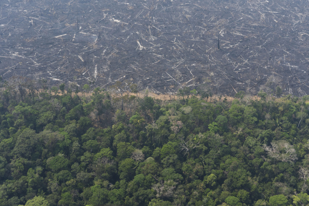 A lush forest sits next to a field of charred trees felled by wildfires near Porto Velho, Brazil, Friday, Aug. 23, 2019. (Victor R. Caivano/AP)
