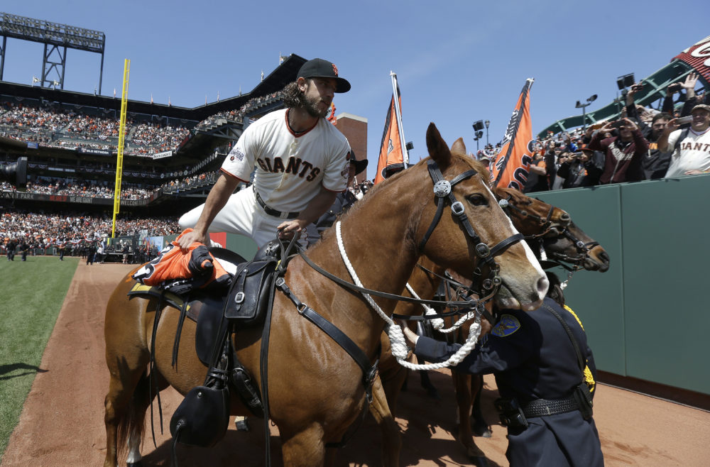 San Francisco Giants pitcher Madison Bumgarner mounts a San Francisco Police horse to carry the 2014 Giants championship pennant.  (Jeff Chiu, AP)