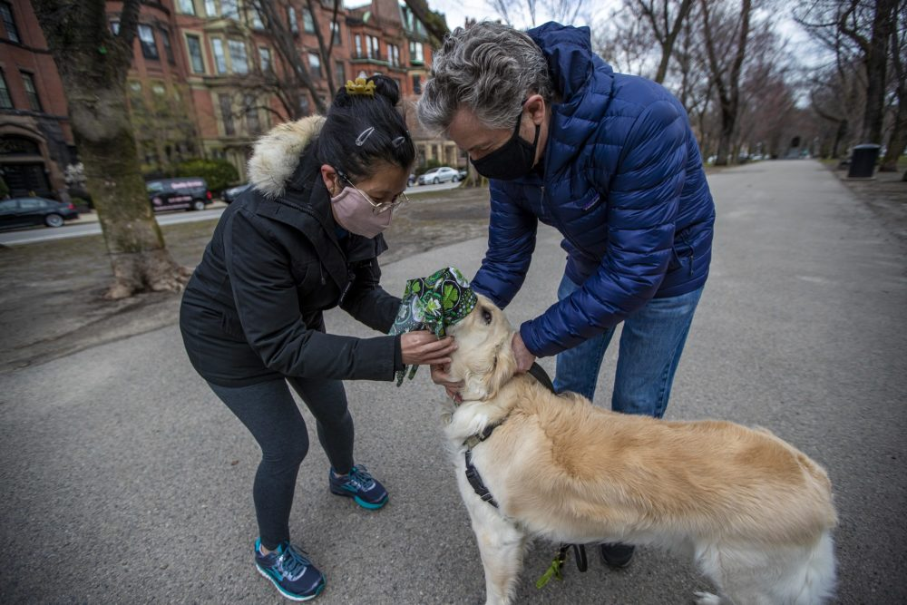 Shan Soe-Lin and Robert Hecht put a mask on their dog Spud while walking at the Commonwealth Avenue Mall. (Jesse Costa/WBUR)