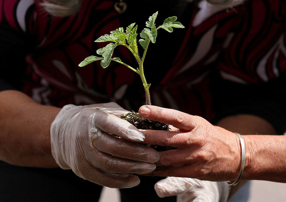 Social distancing? Take the opportunity to get started on spring gardening with tips from a garden consultant. (Justin Sullivan/Getty Images)