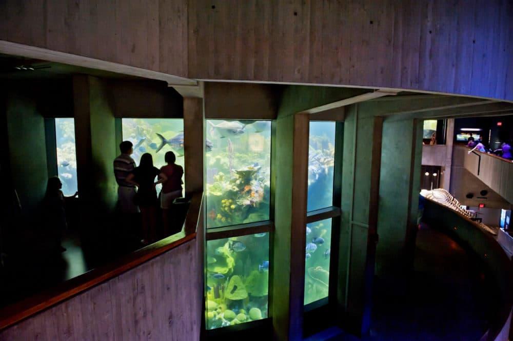The New England Aquarium's Giant Ocean Tank. (Courtesy New England Aquarium)