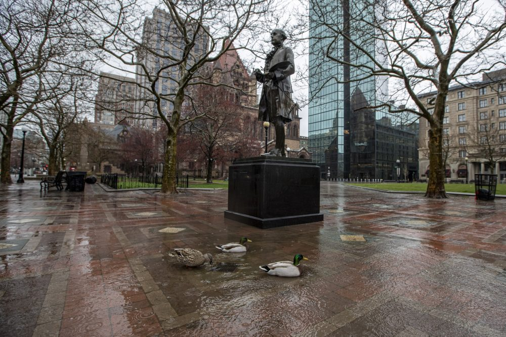 Ducks wading in a puddle at the foot of the statue of John Singleton in Copley Sq. (Jesse Costa/WBUR)