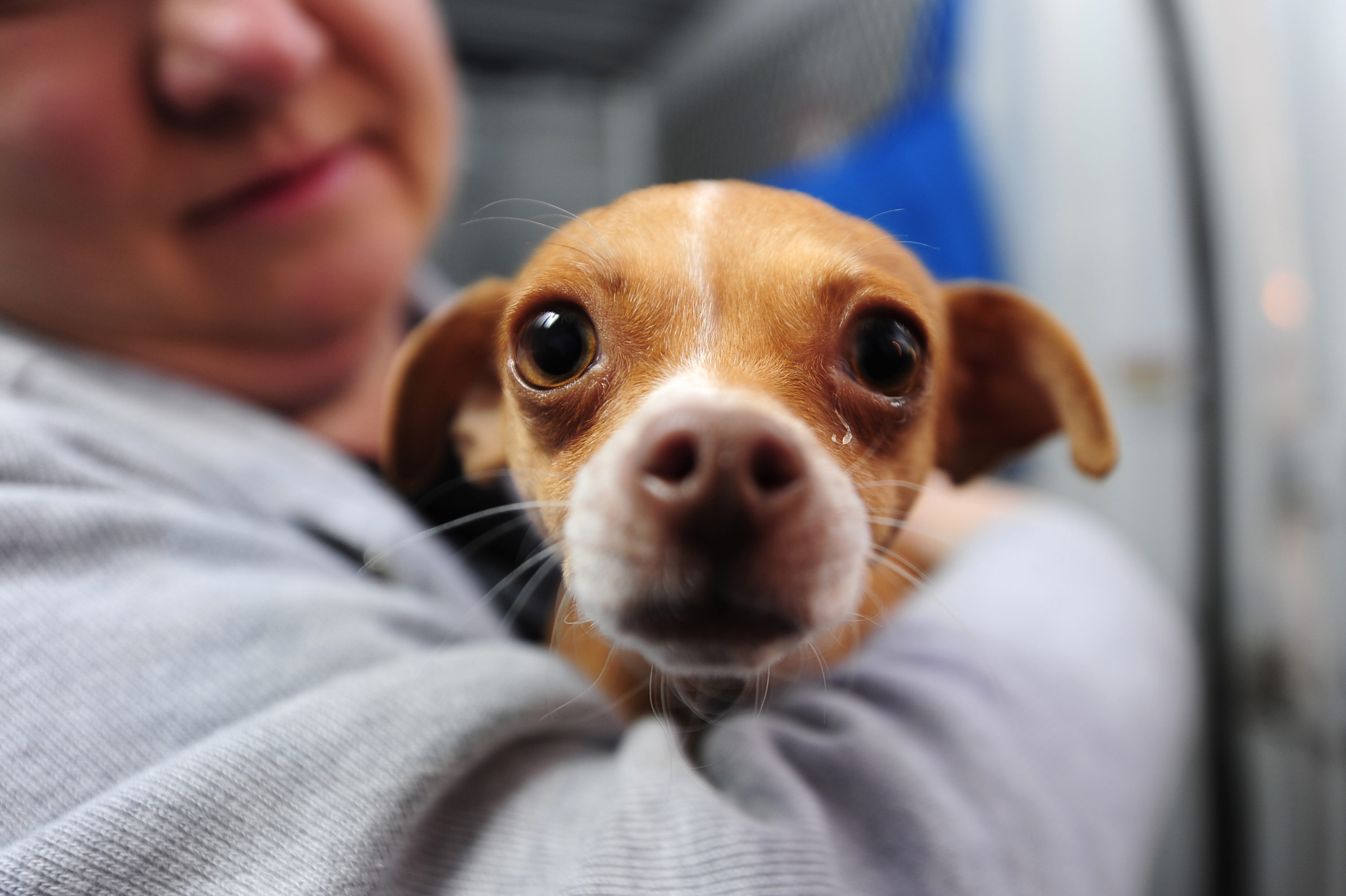 Animal Rescues Report Uptick In Pet Adoptions Amid Coronavirus Pandemic