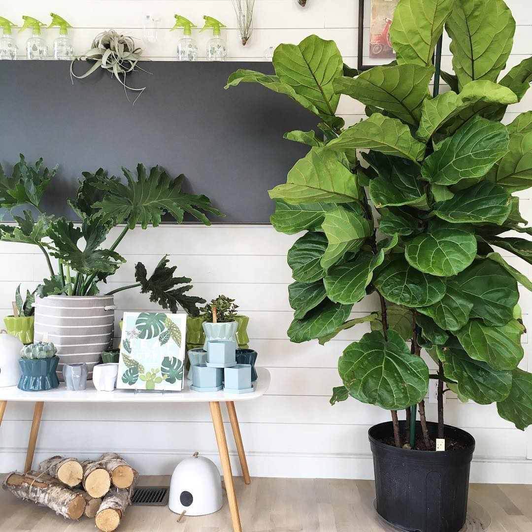 Create Your Own Jungalow With These Tips For First Time Plant Owners The Artery