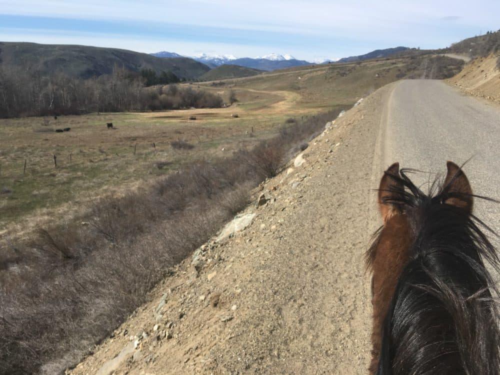 Ashley Ahearn's horse, Pistol. (Courtesy)