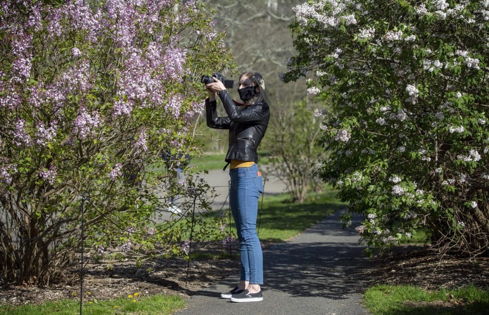 Marina Chernoloz from Watertown, wearing a mask against COVID-19, records video of lilacs in bloom at the Arnold Arboretum. (Robin Lubbock/WBUR)