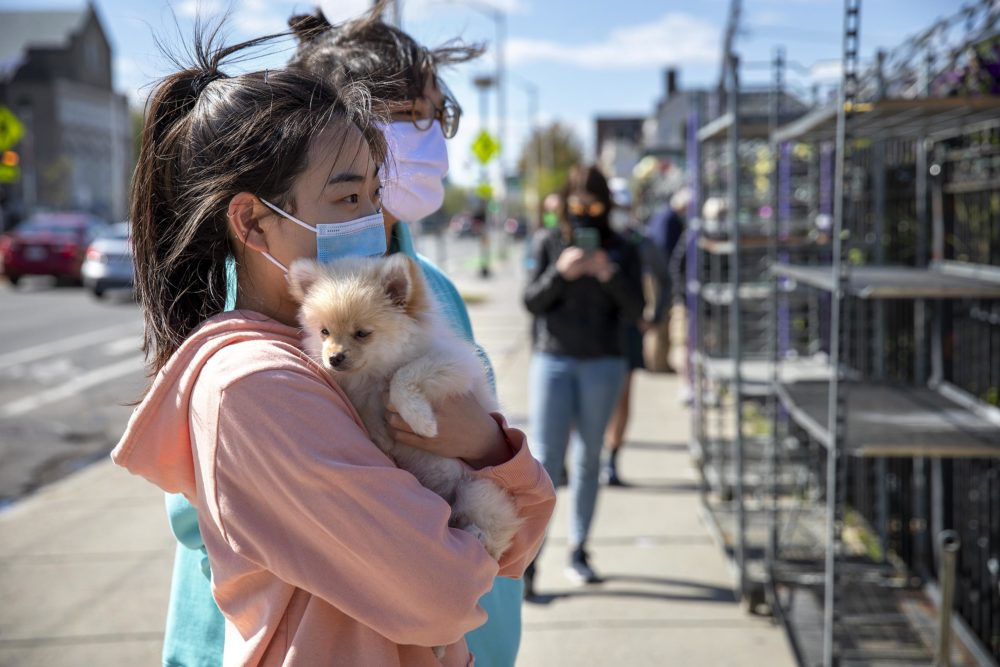 Joyce Kim and her puppy Nory wait in a socially-distanced line to enter Pemberton Farms Marketplace on Massachusetts Avenue. (Robin Lubbock/WBUR)